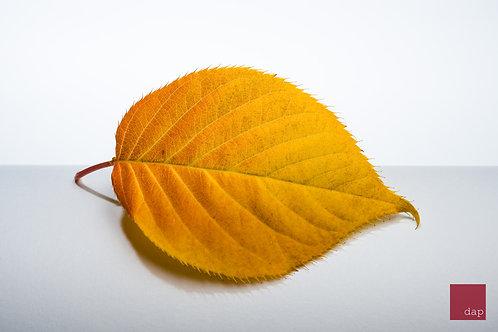 Vibrant Leaf 5