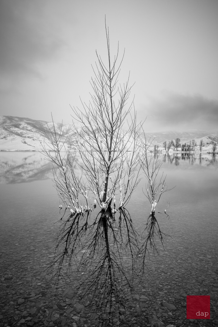 Deer Creek Winter 7 bw