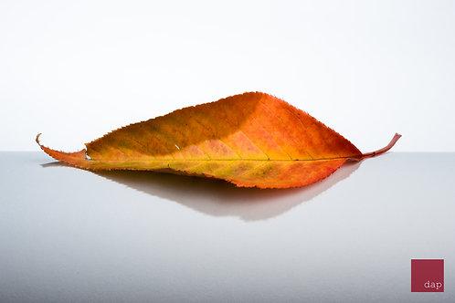 Vibrant Leaf 3