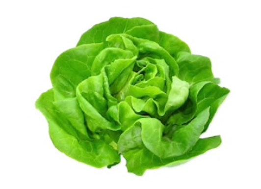 ONTARIO Boston Lettuce (clamshell)
