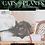 Thumbnail: Cats + Plants