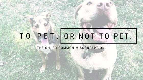 To Pet, Or Not To Pet:  The Oh, So Common Misconception - Part 1