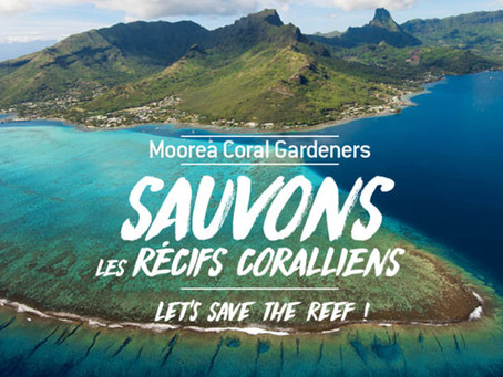425pro and Moorea Coral Gardeners, together to preserve the corals.