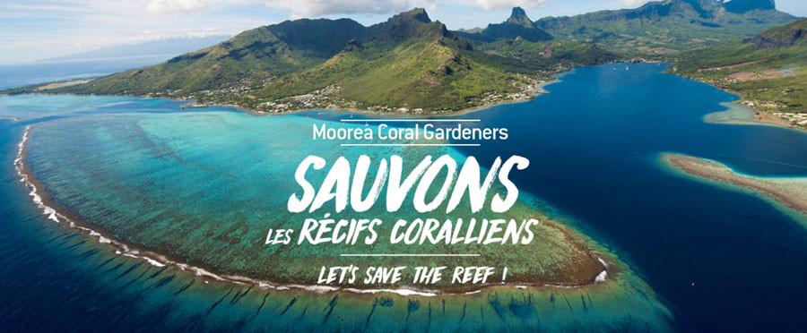 Moorea Coral Gardeners