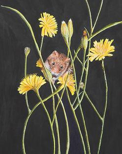 julie harvest mouse 19.jpg