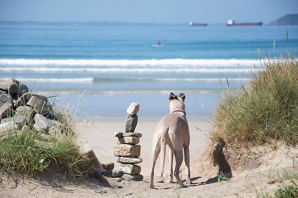 Dog friendly beach Brittany