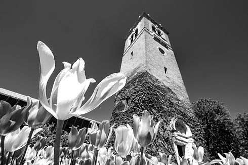 Carillon_Tower_Spring19_3785%20(1)_edite
