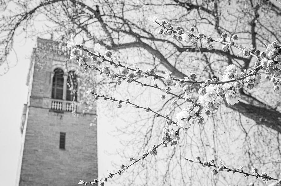 Carillon_Tower_Spring21_8715_edited.jpg