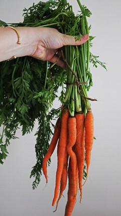 Kara Olsen Food Photographer Carrots from the farm