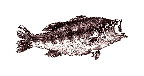 CORVINA%20PNG_edited.png