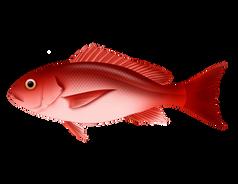 Pargo Rojo