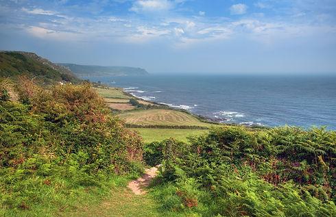 Devon farmland on the coast, England..jp