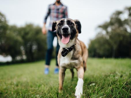 Dog friendly in Devon