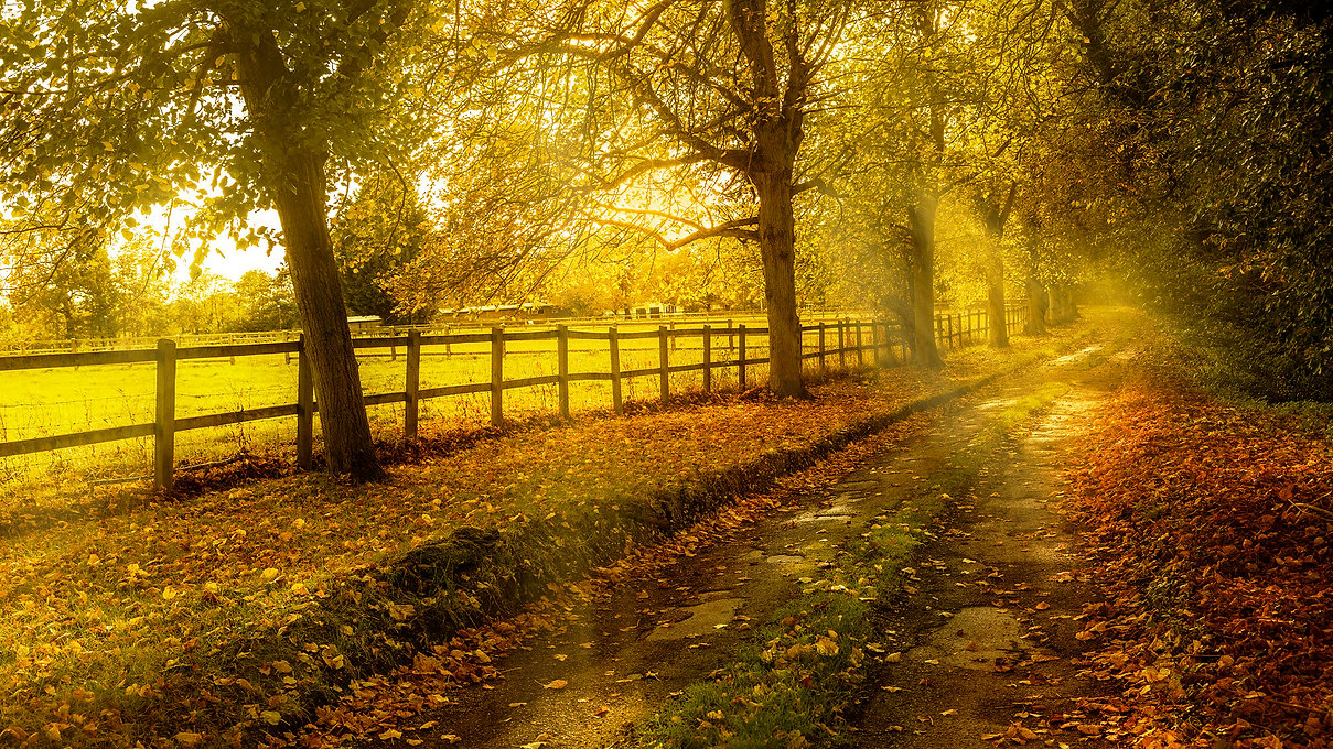 Autumn_Roads_Trees_Fence_Foliage_536354_