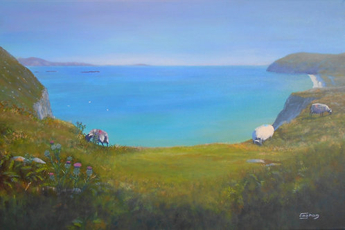 SOLD - Achill Sheep