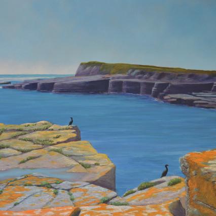 Inishmurray cormorants
