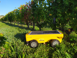 Vitirover as a Service in vineyards