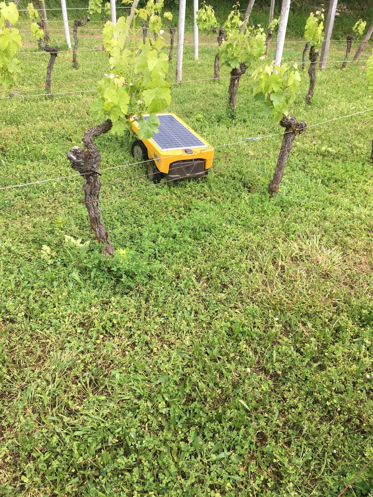 Vitirover vigne