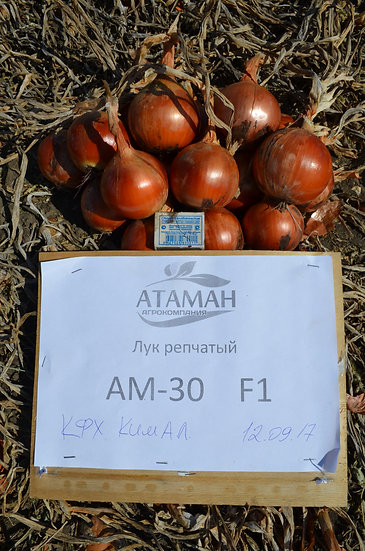 AM-30 F1 (250 000 семян)