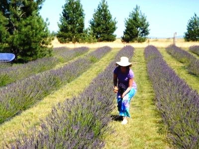 Lavender farm Spokane.jpg