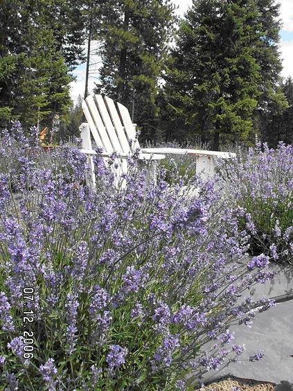 Chair_photo_1.JPG