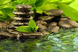 Leaves photo 17.jpg