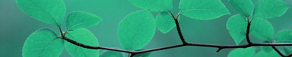 Leaves photo 5.jpg