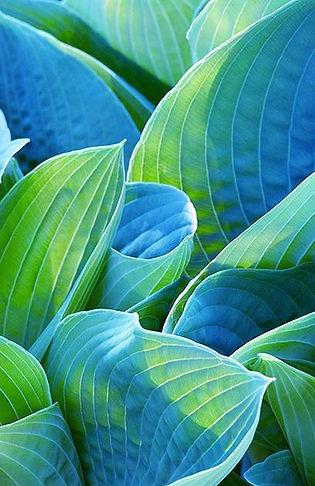 Leaves photo 7.jpg
