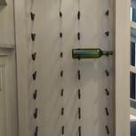 Wine Bottle Pegs