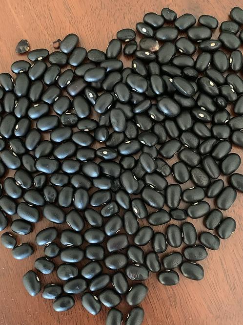 Early Negro Bush Bean