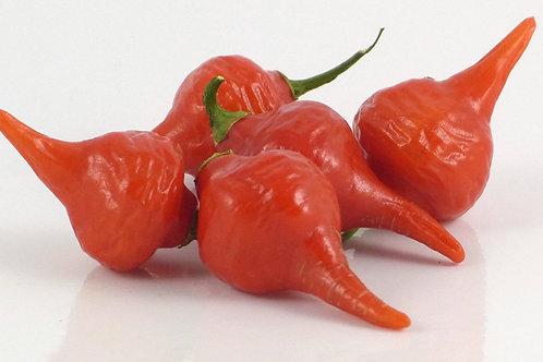 Biquinho Iracena Pepper