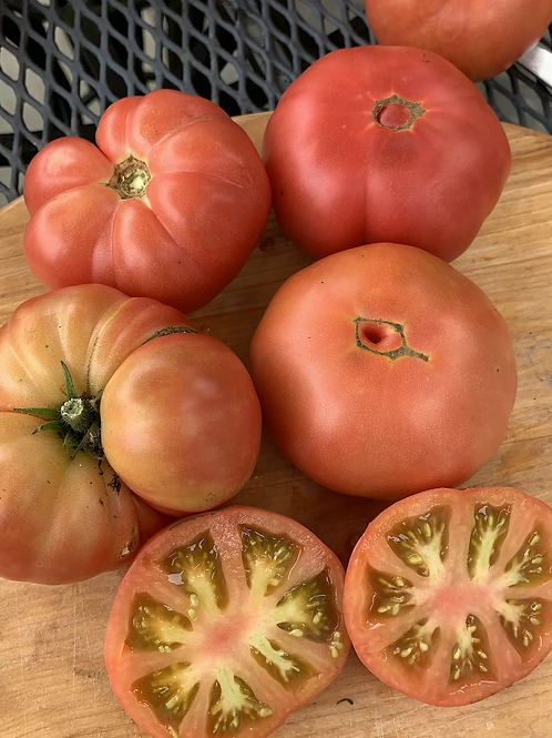 Burpee's Dwarf Giant Tomato