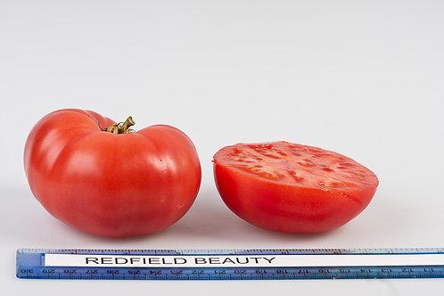 Redfield Beauty Tomato