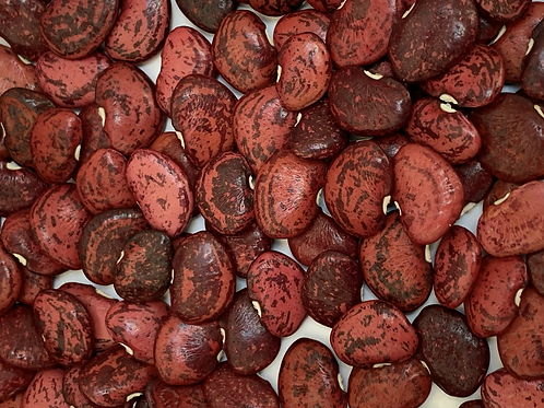 Red Jackson Wonder Lima Bean