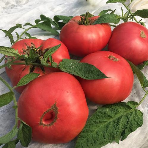 Original Mikado Tomato