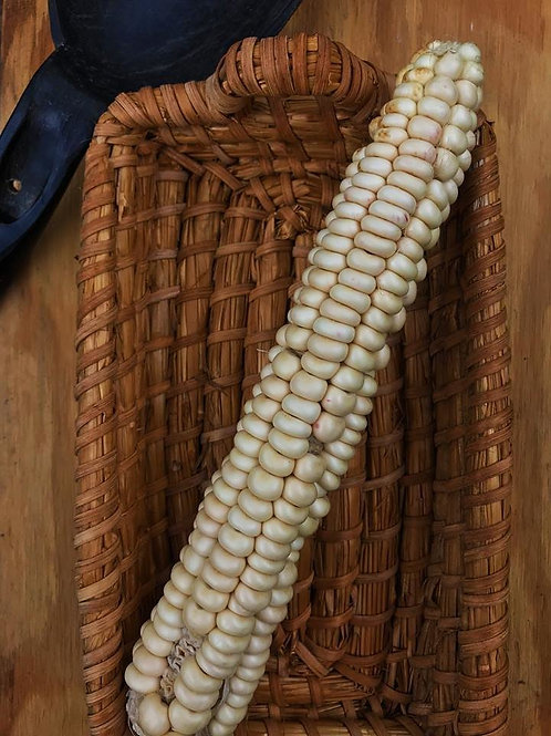 Oneida White Flour Corn