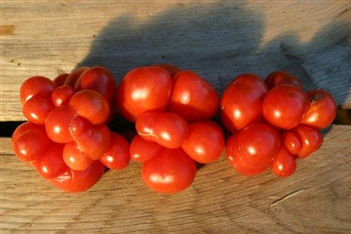 Red Reisetomate Tomato