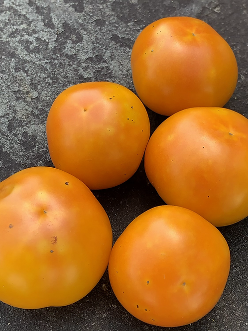 Juniata Sunrise Tomato