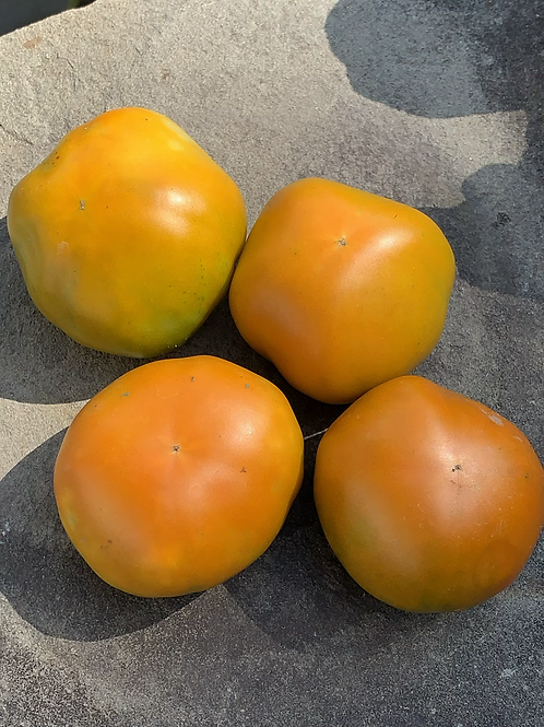 Burpee's Jubilee Tomato