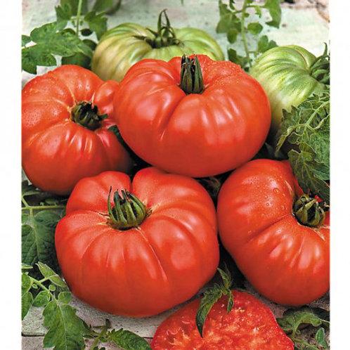 Potiron Escalarte Tomato