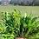 Thumbnail: Deitrich's Broccoli Raab
