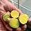 "Thumbnail: Green Zeodary ""Turmeric"" (1 ounce)"