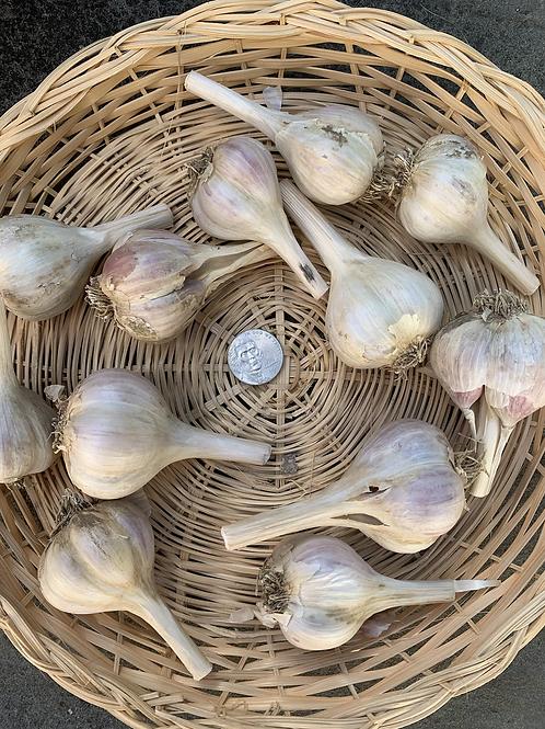 Rosewood Garlic