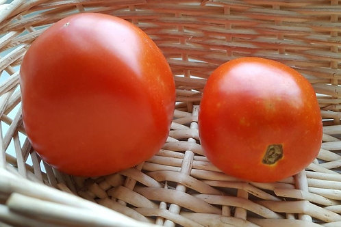 Governor Pennypacker Tomato