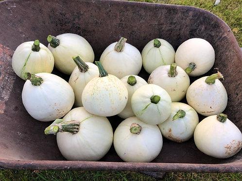 Fortna White Pumpkin