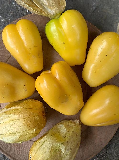 Malinalco Tomatillo