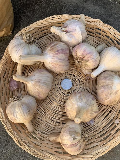 Roughwood Large Garlic