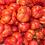 Thumbnail: Schmiegg Stoo Stuffing Tomato