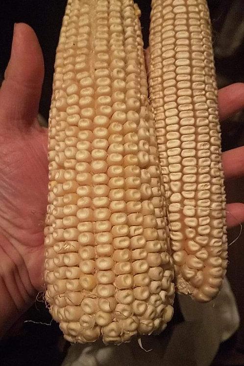 Rustler White Dent Corn (OP)