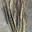 Thumbnail: Nigri-Nudum Black Barley